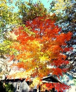 Fall Color, November 8, 2015