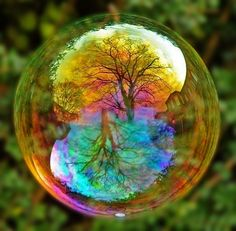 bubble tree